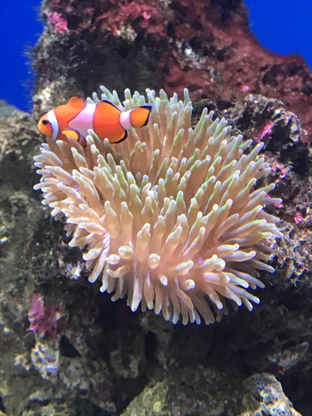 コスプレイヤーにお勧めする新江ノ島水族館の二モ