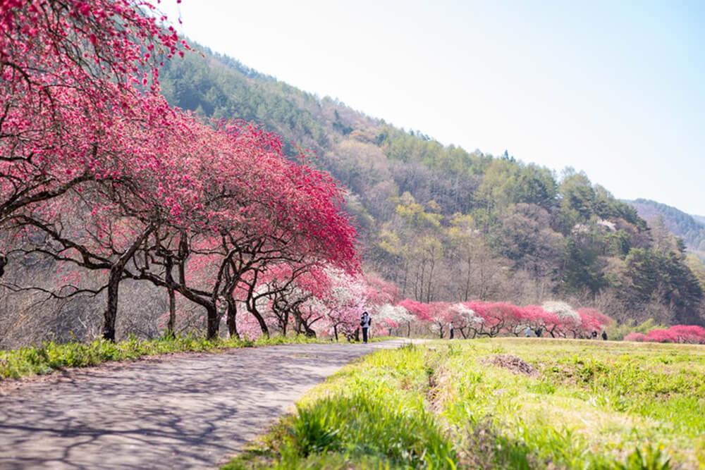 岳の湯温 泉雲渓荘「コスプレ撮影プラン」002