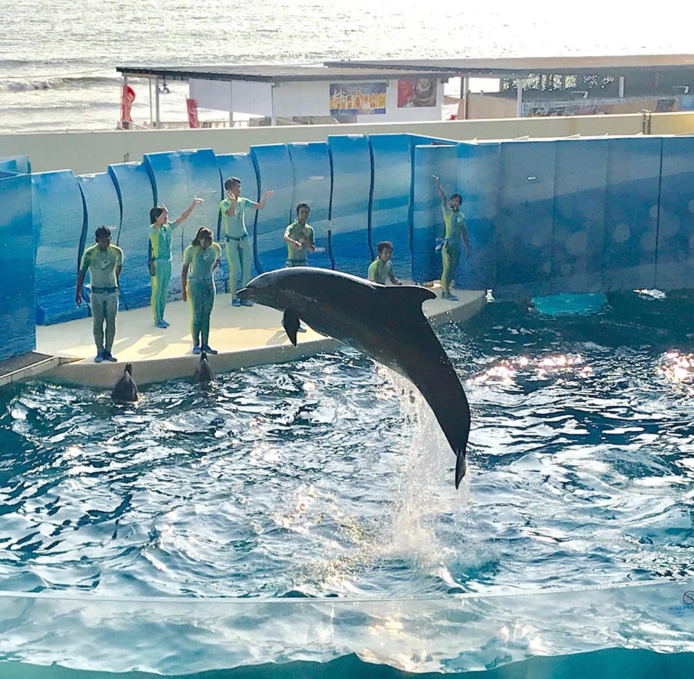 コスプレイヤーにお勧めする新江ノ島水族館のイルカショー