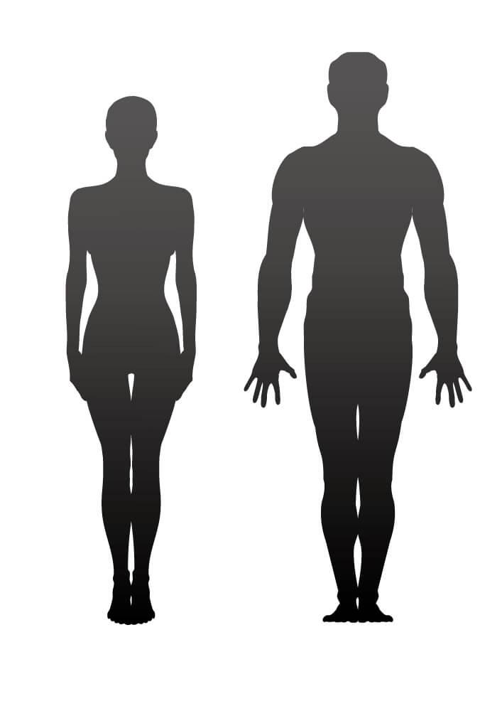 男女の骨格の違い